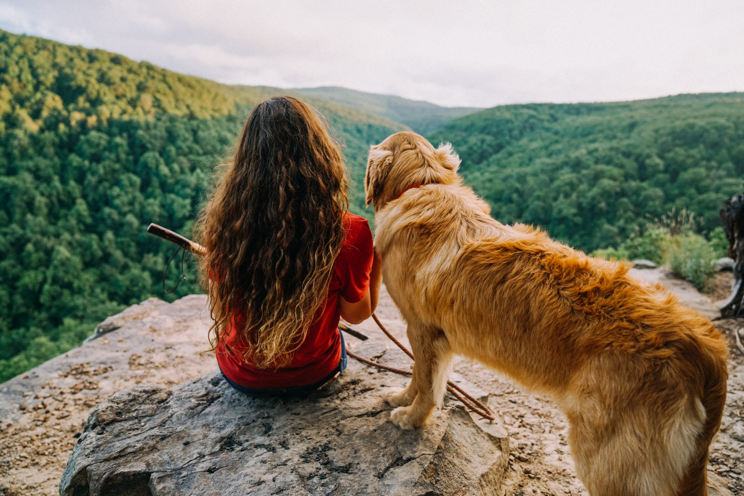 7 Must See Pet Friendly Trails