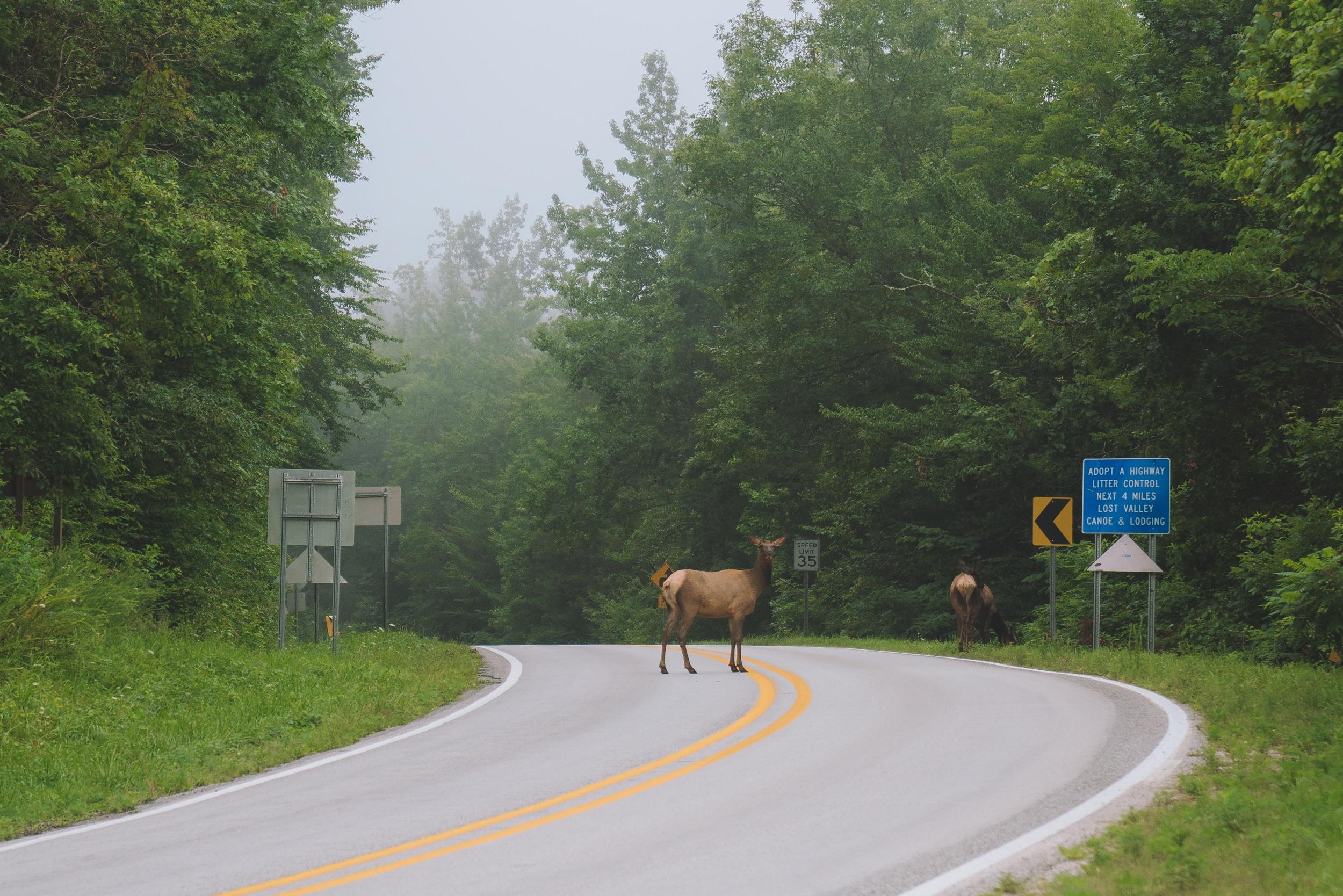 Boxley Valley elk