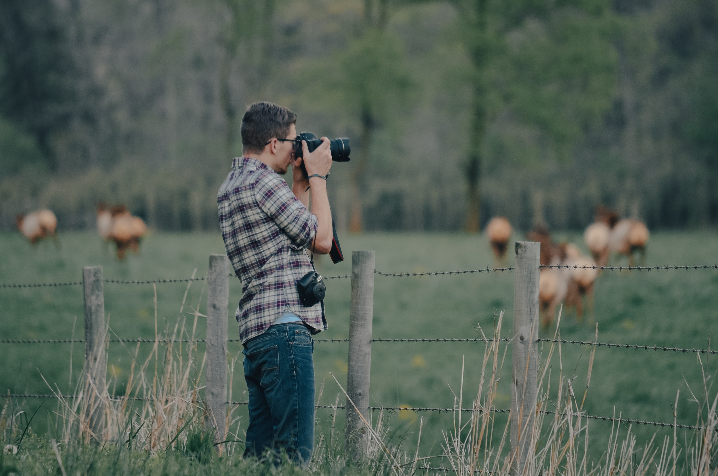 Elk Viewing in Boxley Valley